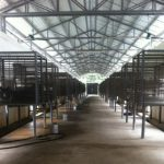 Bear bile farm to become a bear sanctuary
