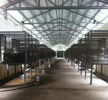 Interior view of the Nanning Bear Farm. (AAF photo)
