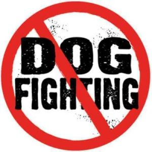 no_-dog_fighting