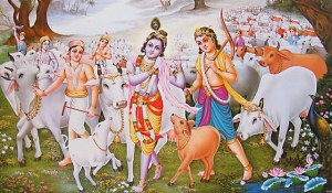 Yet another view of cattle in Vedic times.