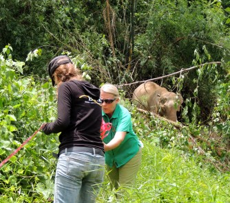 Thong Jai, Carol Buckley, and elephant at the Boon Lek Elephant Sanctuary in Thailand. (Elephant Aid Intl. photo)