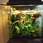 Crested Gecko Cage Here Are 3 Awesome Options