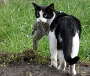 Cats occasionally get plague from infected prey. Eddy Van 3000