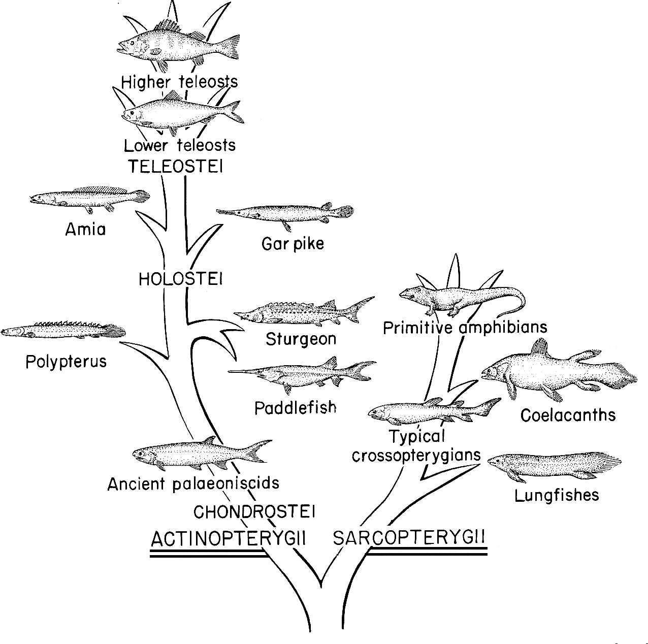 Creatures Evolution Worksheet
