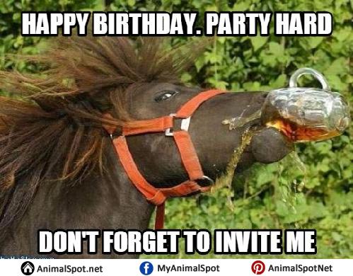 32 Funny Birthday Memes Horses Factory Memes