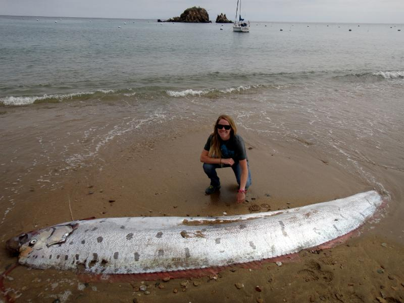 Giant Oarfish Facts Habitat Diet Life Cycle Baby Pictures