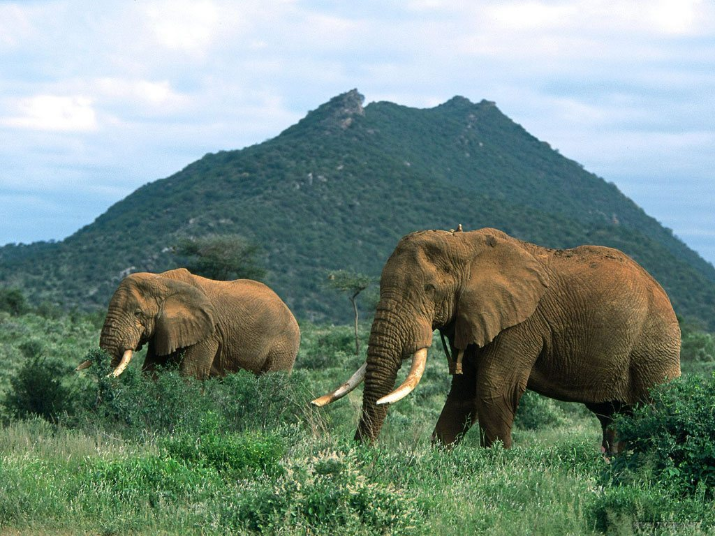 read more information about the african elephant
