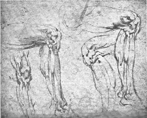 michelangelo-drawings-anatomical-study-of-legs