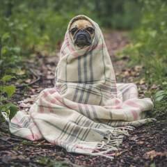 Faire appel aux dresseurs canins pour éduquer votre chien ou chiot ?
