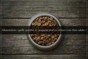 Alimentation : quelle quantité de croquette peut-on donner à un chien adulte ?
