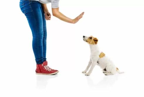Dresser son chien : quelles sont les meilleures techniques à employer?