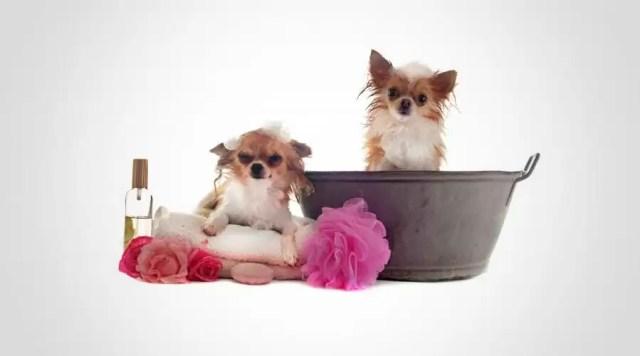 explications et conseils parfum pour chien