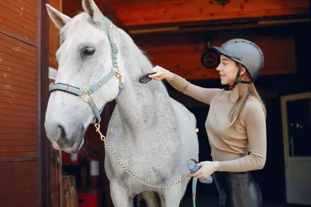 s'occuper des chevaux