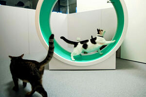 meilleures roues d exercice pour chat