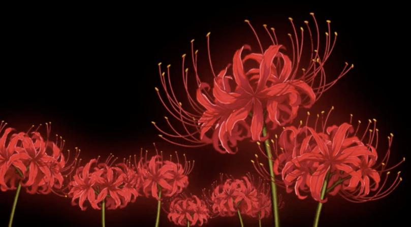 red spider lillies