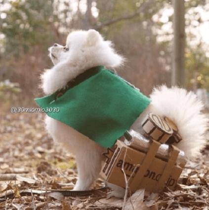 Attack on Pomeranian 001