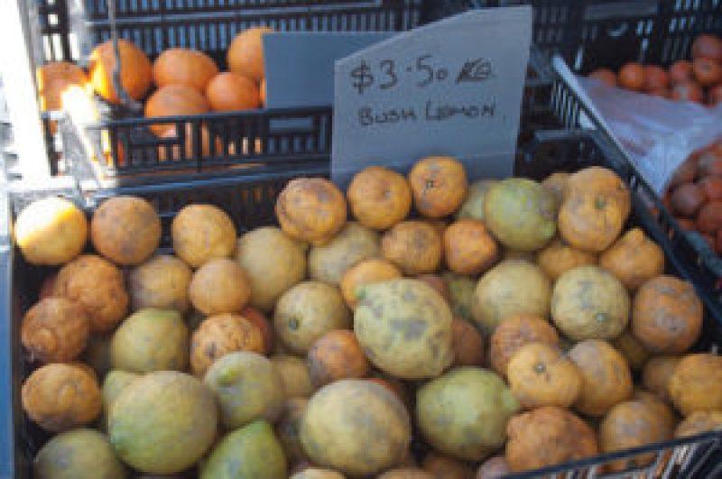Bush Lemons at the Cleveland Markets, Brisbane QLD Australia 20150802-VPR00308.jpg