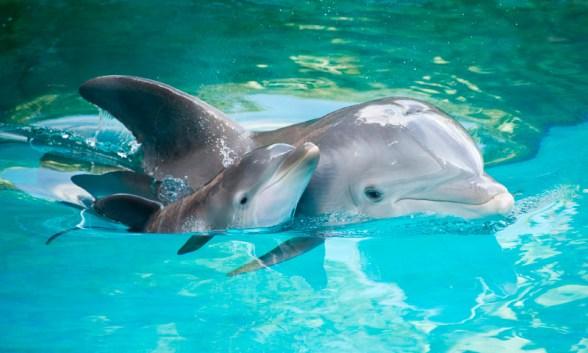 Resultado de imagen de delfin cría