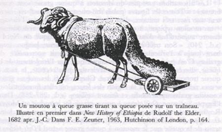 Image result for herodotus sheep
