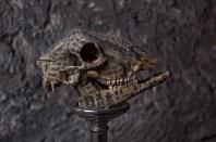 Skull 5