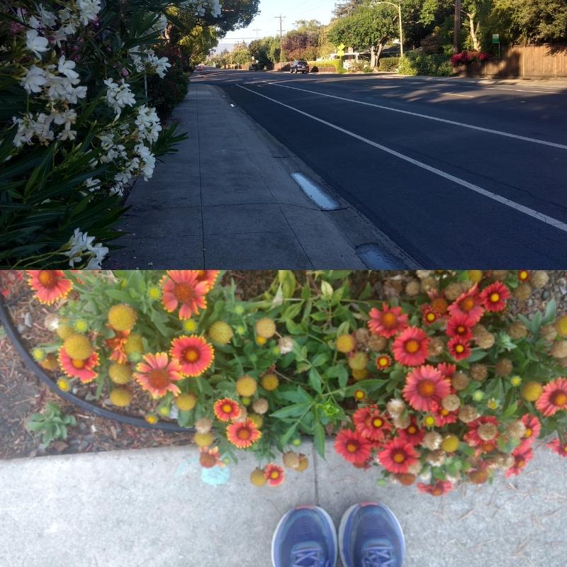 What my run/walk route looks like!