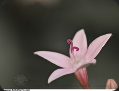 Macro Magic - Maui Flowers  -  © Anita Harris -  www.AnitaHarris.com