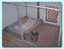 Anita's Puppy Palace Pet Boarding Kennels
