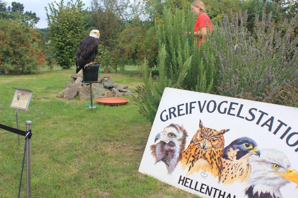 Besuch aus der Greifvogelstation Hellenthal