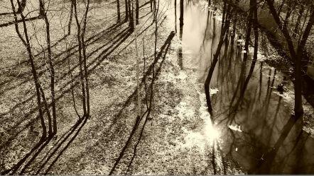 treeswater
