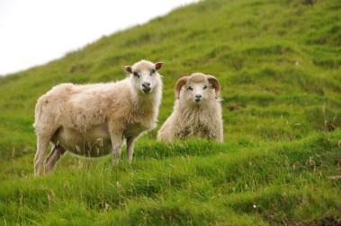 ANJCI ALL OVER | Visiting the Faroe Islands Europe's Best Kept Secret