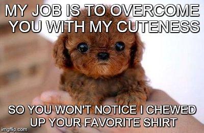 Puppybehavior