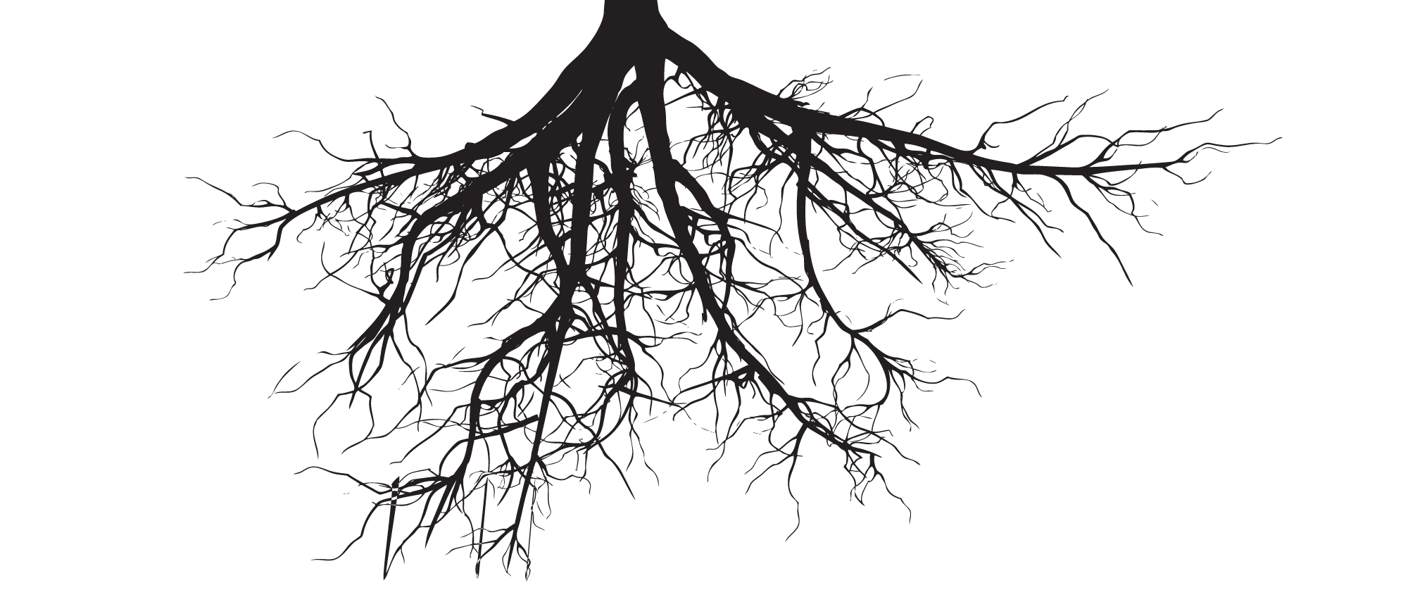 Your Questions Answered Bare Root Root Ball Or