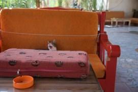 Cat, Egypt