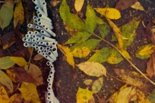 pavement crack rods 22