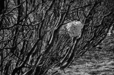 TreeCones3