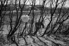 TreeCones5