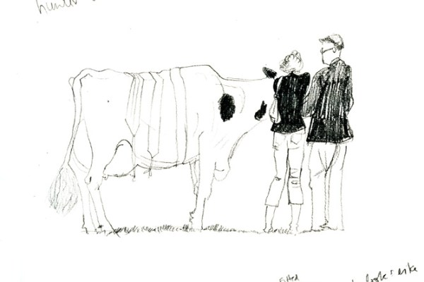 Drawing of a cow covered in prize winning banners.