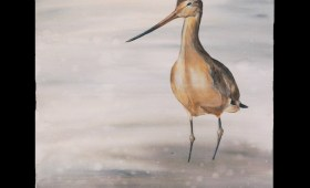 Long-billed Godwit