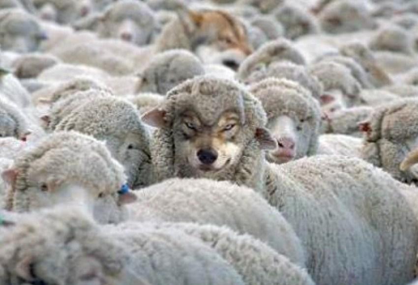 apparizioni Colle del buon pastore