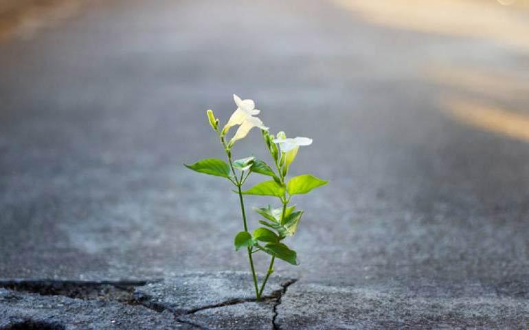 dare speranza