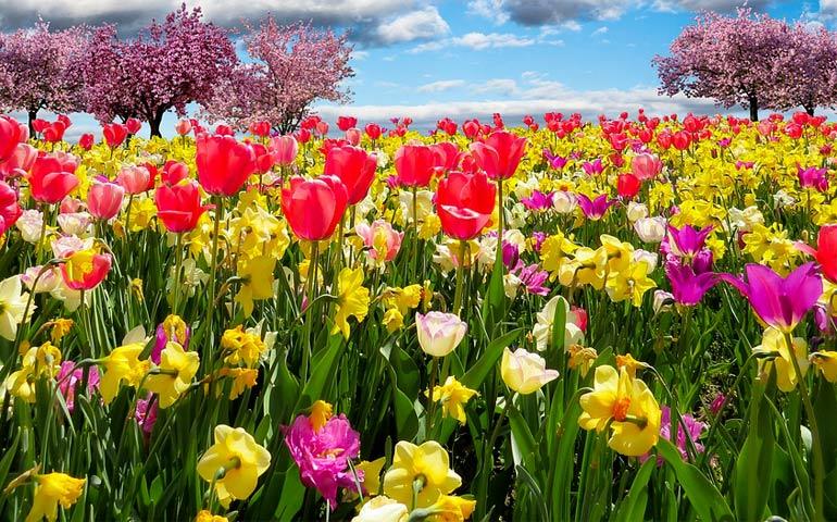 La preghiera diventi per noi primavera di grazia