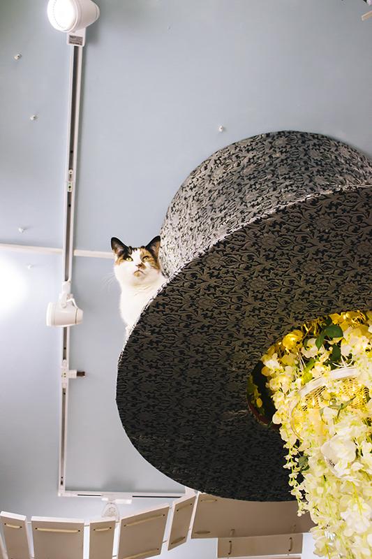 Lady Dinah's Cat Emporium
