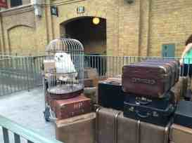 Hedwig at King's Cross Station Universal Studios