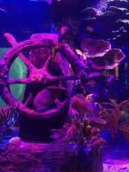 Sea Life Michigan Aquarium - Shipwreck habitat