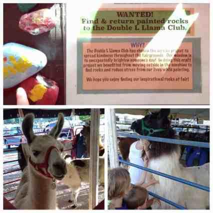 4-H County Fair - Llama Rocks