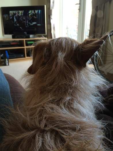 Alfie ears