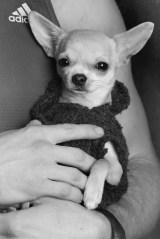 little-cute-dog-2016-ann-charlotte-photography2016-3