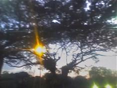tree at dusk, Queensway