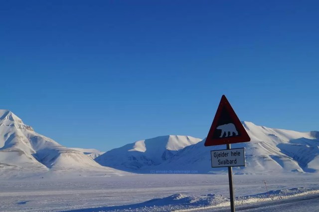 Number 2 on your things to do in Spitsbergen: Go polar bear watching