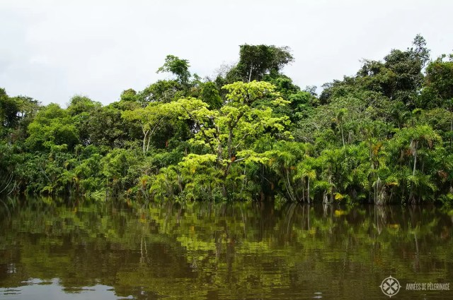 A lagoon inside the Amazon Rainforest